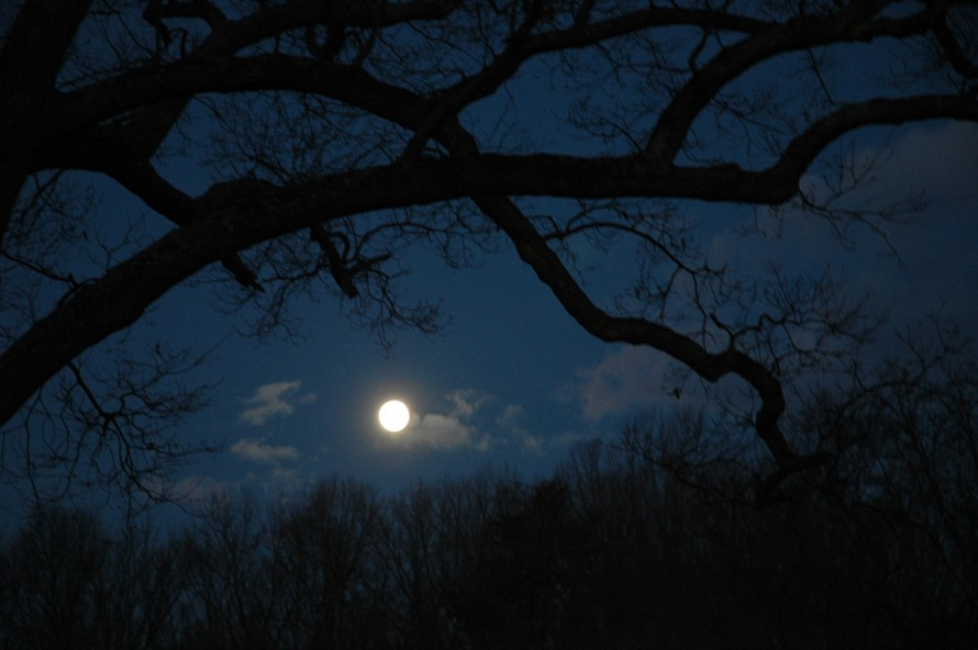 Glasgow_Hartwood_moon_and_Tree_January_20081033_1186x780