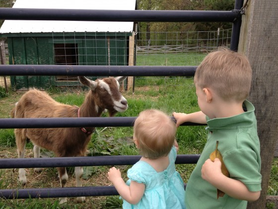 Lochlan and Felicity looking at our new goat