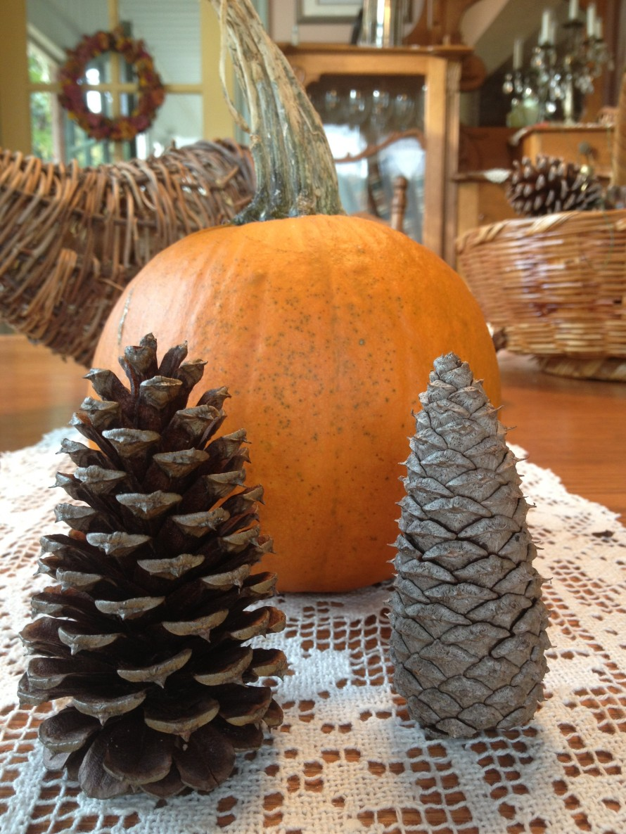 Some pine cones are open, some closed. I put the closed ones in the oven to open them. *pumpkin grown on Glasgow Farm